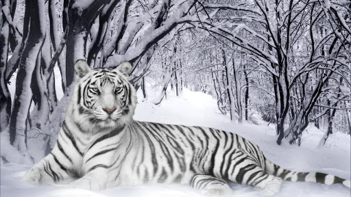 White Tiger Pack 2 Wallpaper