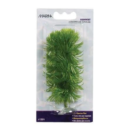 Hornwort 10cm med sugkopp