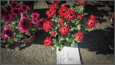 Photo: Crizanteme - de pe Str. Tineretului - 2017.11.01