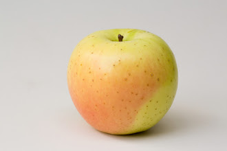 "Photo: 'Honeygold' apple developed by University of Minnesota, released in 1970. A crisp apple with a juicy, sweet flavor. Ripens the first 10 days of October in Minnesota.  Minnesota Agricultural Experiment Station project #21-016, ""Breeding and Genetics of Fruit Crops for Cold Climates."""