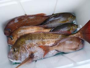 Photo: イタヤさんの釣果です。 いいサイズの真鯛が目立ってますね!