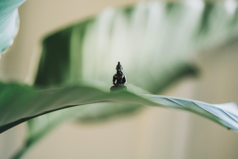 A bug on a leaf  Description automatically generated with medium confidence
