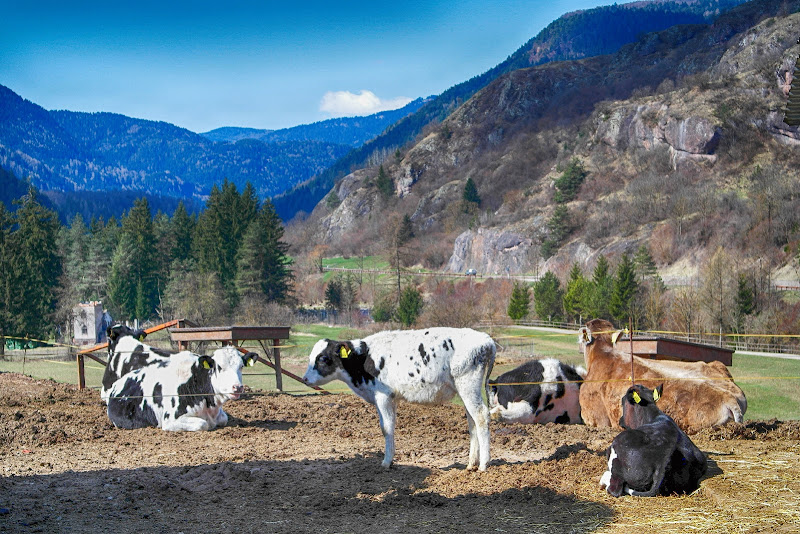 Cow's Valley di fasele72