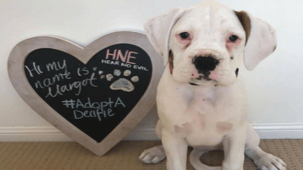 OMC Success stories Deaf dog rescue