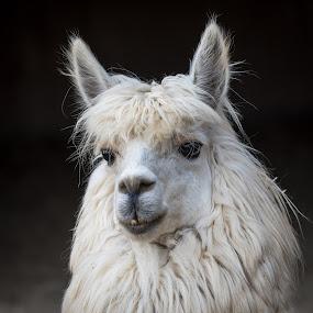 by Crazy  Photos - Animals Other Mammals