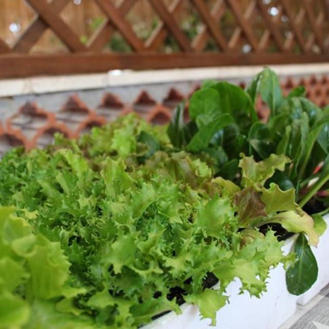 Salad Growing #Fotocontest #Verdismi di pamela91g