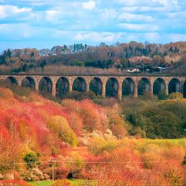 Autumn Wales by Łukasz Rogalski - Buildings & Architecture Bridges & Suspended Structures ( autumn leaves, autumn, wales, autumn colors,  )