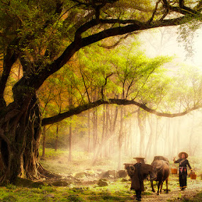 by Justin Ng - Landscapes Forests