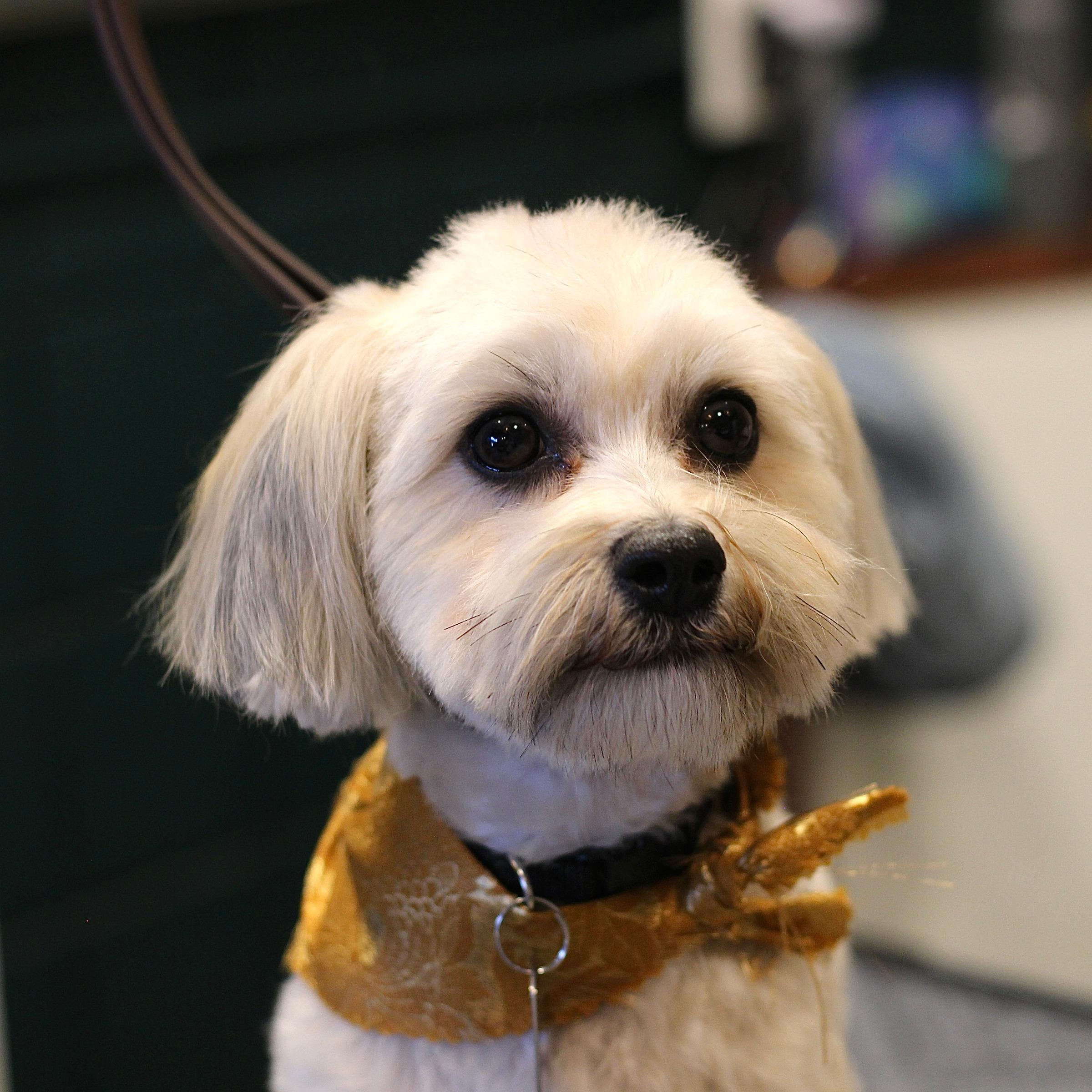 Full-service dog grooming in LA