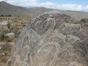 Photo: Csolpon Ata hópárducai, Csolpon Ata nyájat terelő hópárducok, Cholpon Ata, Cholpon Ata petroglyphs