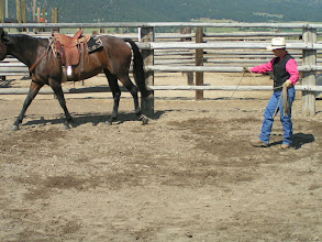 Photo: Putting a 'feel' on the lariat, which is attached to Tilly's left-hind foot.