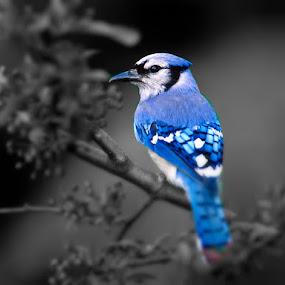 by Kaja Radošević - Animals Birds