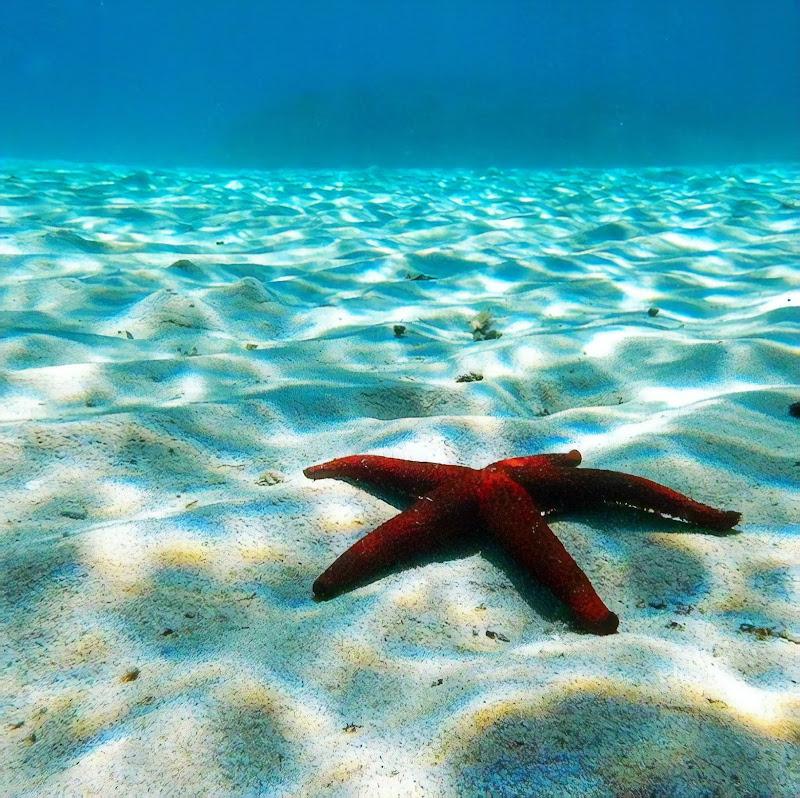 Sono stato felice ovunque ho potuto vedere l'oceano. di mony29