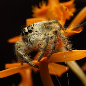 Just Pull the Web by Rizal Meilano - Animals Insects & Spiders (  )
