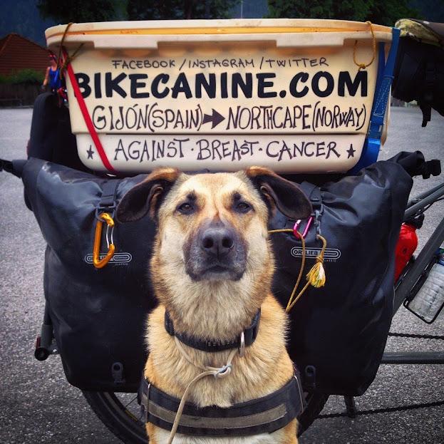 Hippie, la compañera de Pablo en sus proyectos con Bikecanine