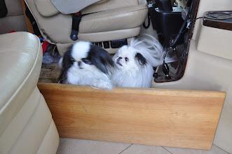 Photo: Brewster puppies