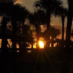 by Linda Brooks - Landscapes Sunsets & Sunrises ( sunset, sun, landscape, photography, palm trees )