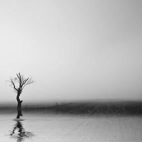 Fog tree by Nikos Koutoulas - Landscapes Waterscapes ( b/w, water, reflection, kozani, tree, fog, pwcbwlandscapes, αντανάκλαση, νερό, ομίχλη, δέντρο, κοζάνη, black and white, b and w, landscape, b&w, monotone, mono-tone )