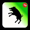 Palmeiras ao vivo - O melhor App do Verdão! ;D APK
