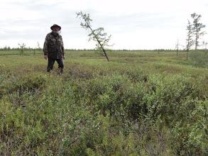Photo: А по берегам тундра с березкой и редкими лиственницами.