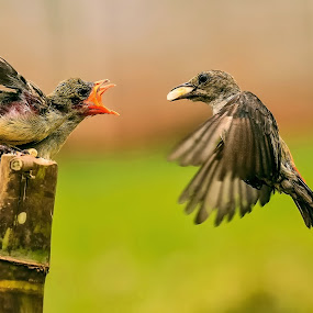 Whose turn is it ? (2) by Husada Loy - Animals Birds