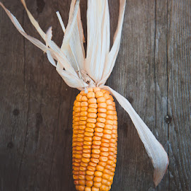 Dried Corn by Tanya Greene - Food & Drink Fruits & Vegetables ( harvest, halloween, fall, corn, thanksgiving, farm, season, autumn, dried )