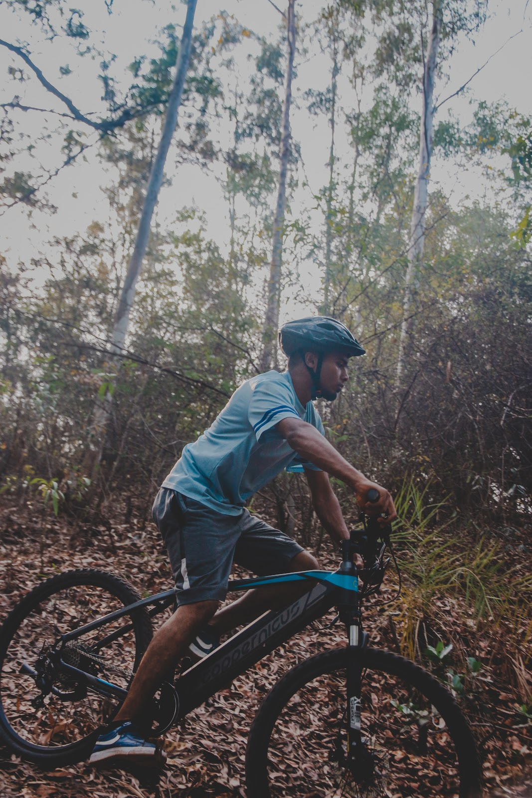 The turahalli forest cycling route, check out coppernicus.com for more information