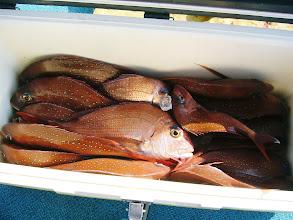 Photo: そして、釣果発表! こちらは、タムラさんのクーラーBOX。