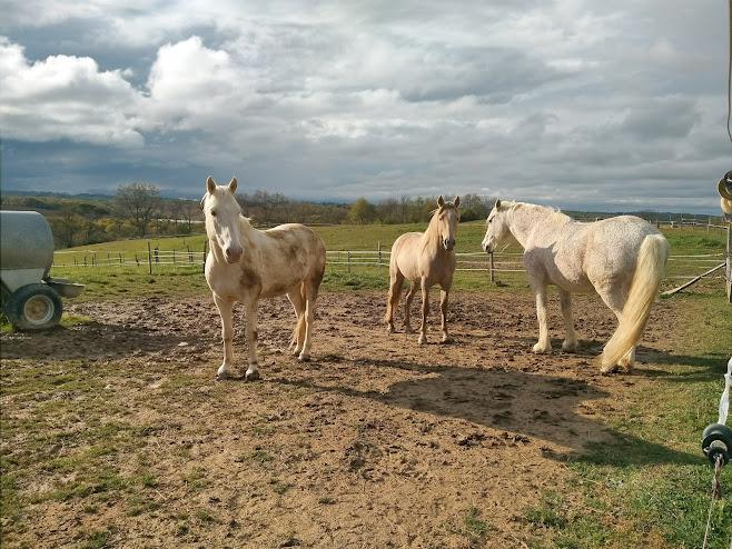 三頭の白馬