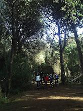 Photo: Il gruppo in pineta