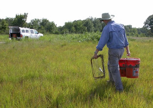 Photo: Hauling out American Burying Beetle pitfall traps & vertebrate extruders