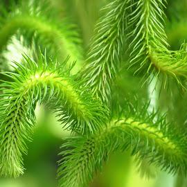 by Kinga Urban - Nature Up Close Leaves & Grasses (  )