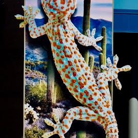 Ginormous  Gecko by Donna Probasco - Animals Amphibians (  )