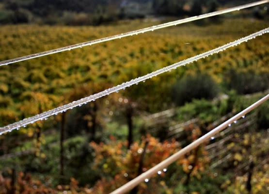 Linee sul Vigneto di The_Photographer_91