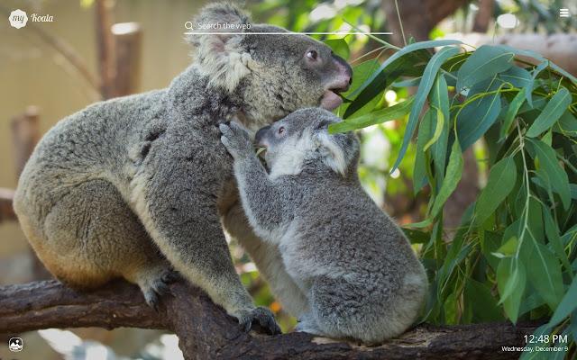 View Koala Wallpapers Background