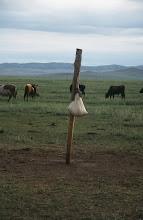 Photo: 03268 ハドブルグ家/シャル・オス(乳製品)作り/シャル・オスを布袋に入れ、柱にぶら下げて水分を切る