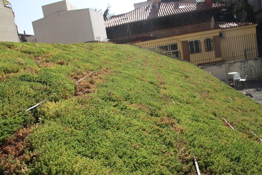 Construcción cubierta vegetal rizoma