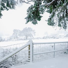 by Keith Sutherland - Landscapes Weather ( white sky, canada, field, snow, tree, cold, fence )