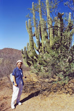 Photo: #023-Cactus dans le désert du Sonora