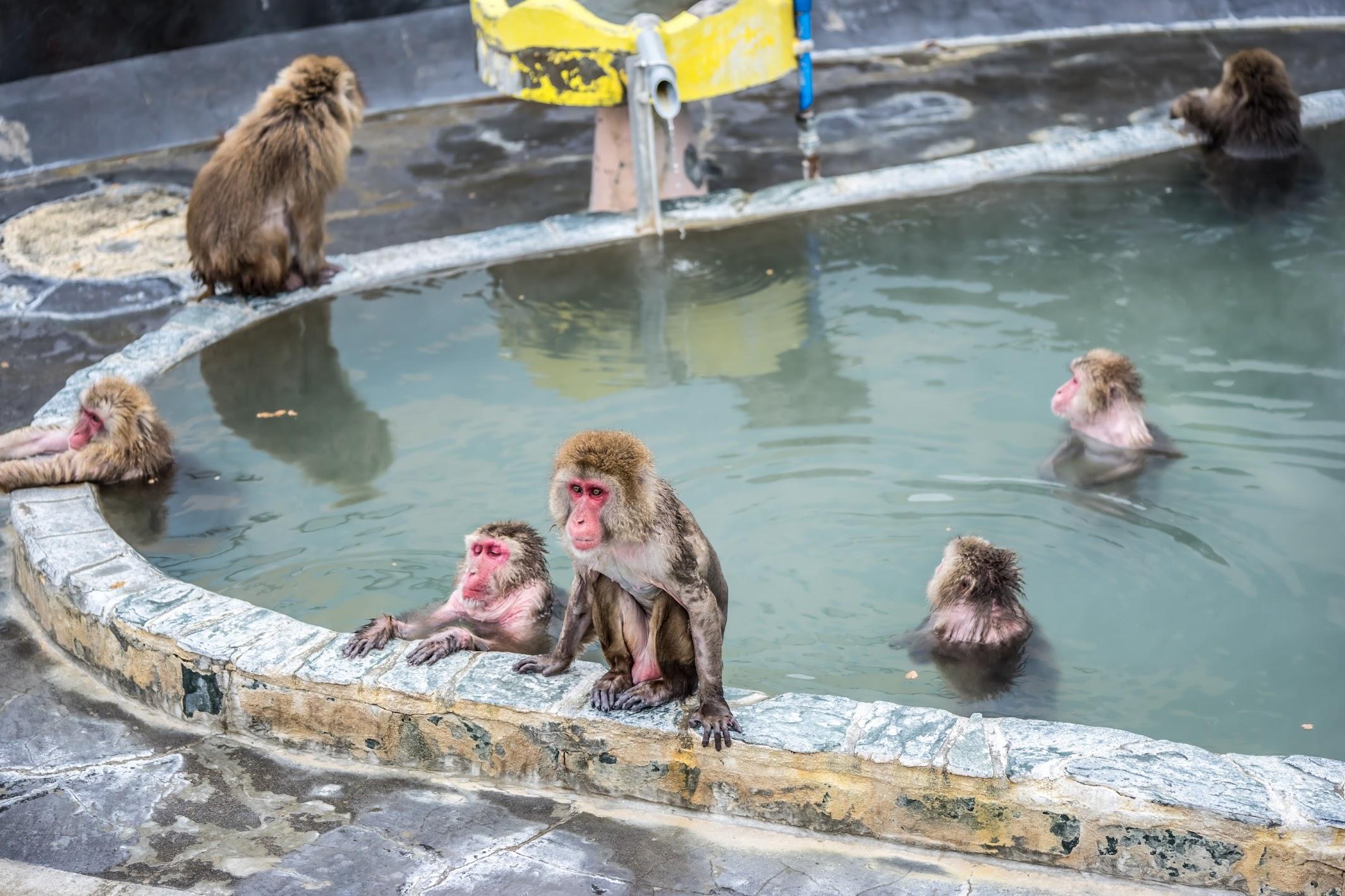 函館市熱帯植物園 サル 温泉3