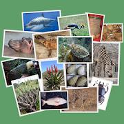 App Icon for IDentifyIt Species App in Czech Republic Google Play Store