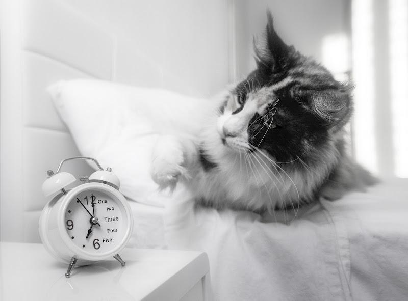 Non svegliare il gatto che dorme di utente cancellato