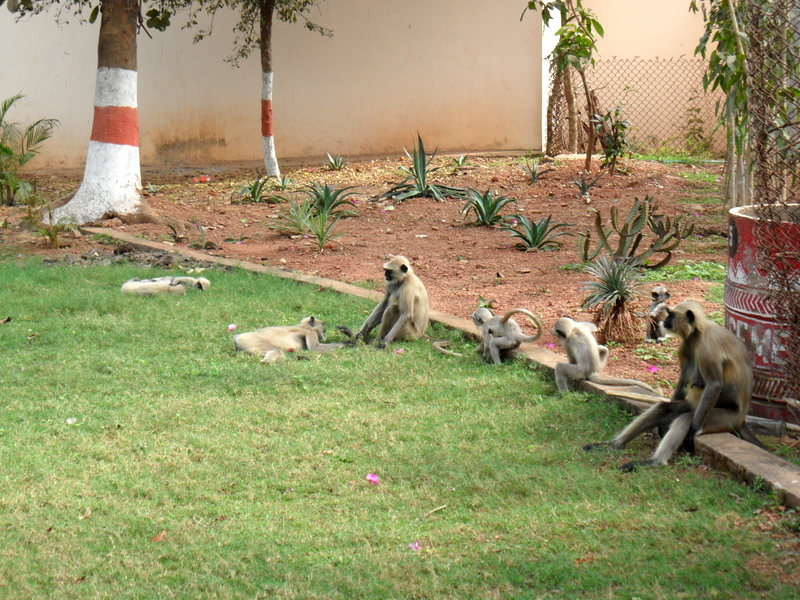 Photo: Some visitors to the zoo don't pay the ticket...