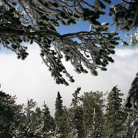 Ice on Clouds by William Green - Novices Only Flowers & Plants