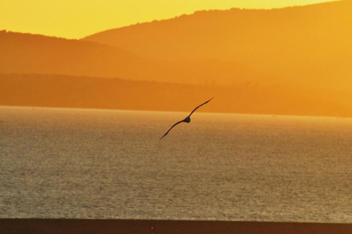 Volo al tramonto di silvvv