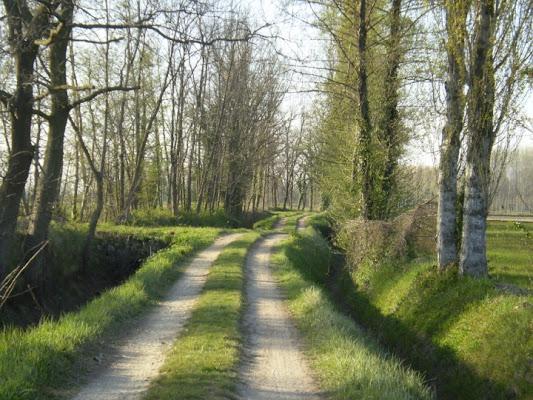 Country road di Cisco1979
