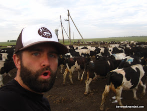Photo: This is me on horseback, putting cows out to pasture