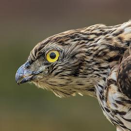 by Jane Bjerkli - Animals Birds