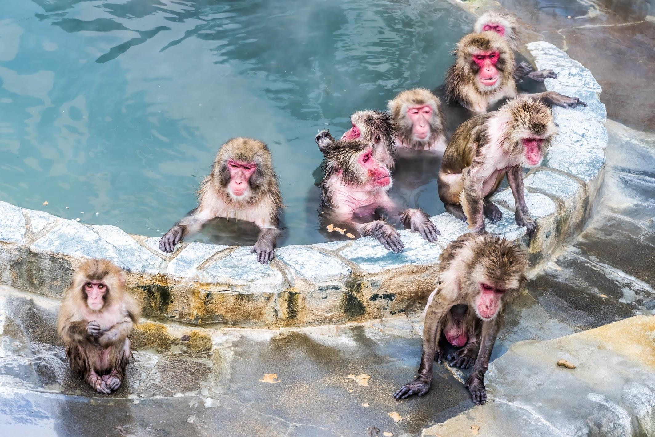 函館市熱帯植物園 サル 温泉1