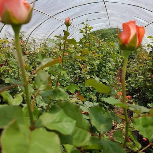 Flower Farm QLD